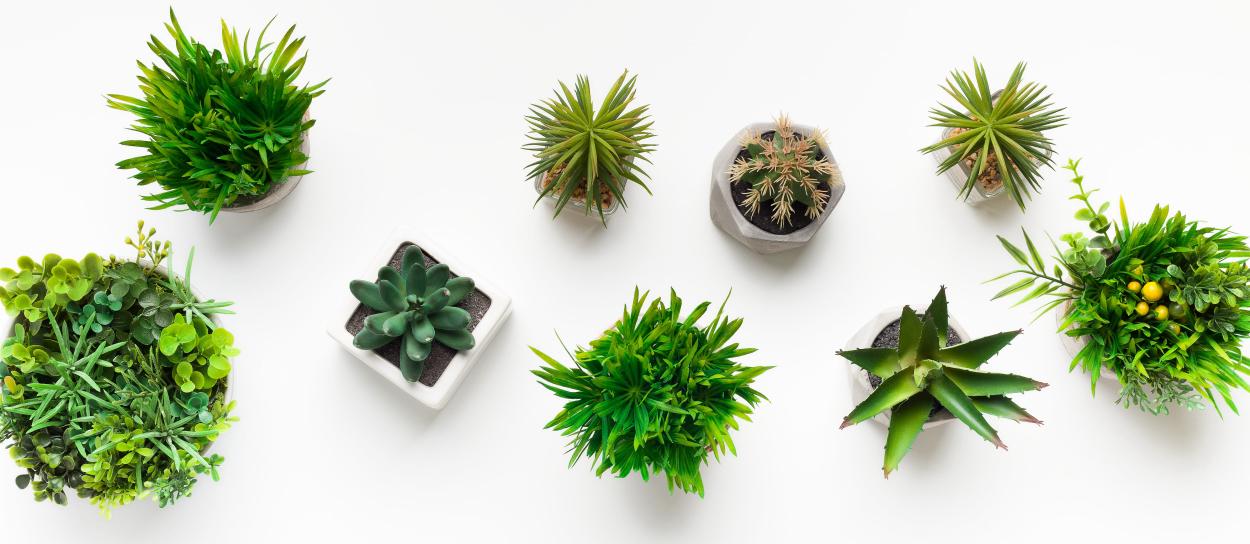 Disadvantages of faux plants
