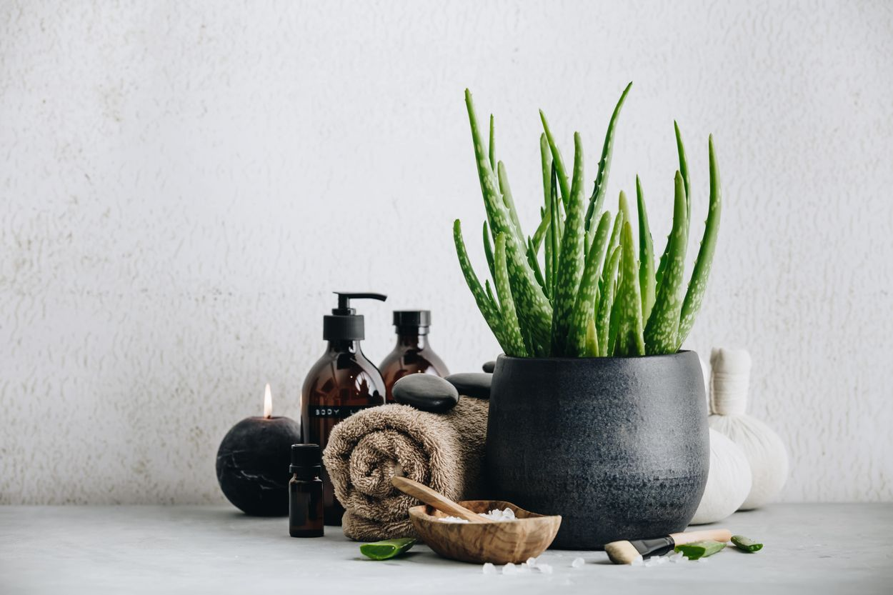 How to use aloe at home