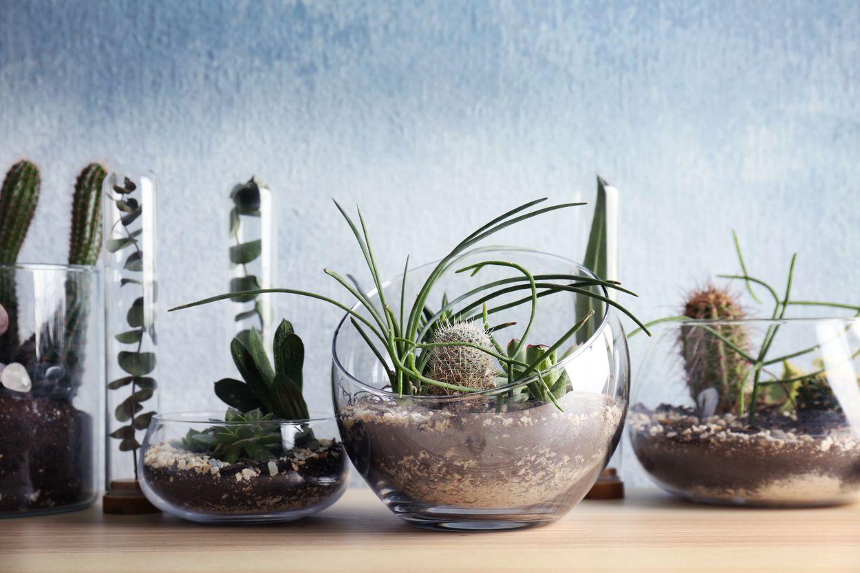 What is a florarium?
