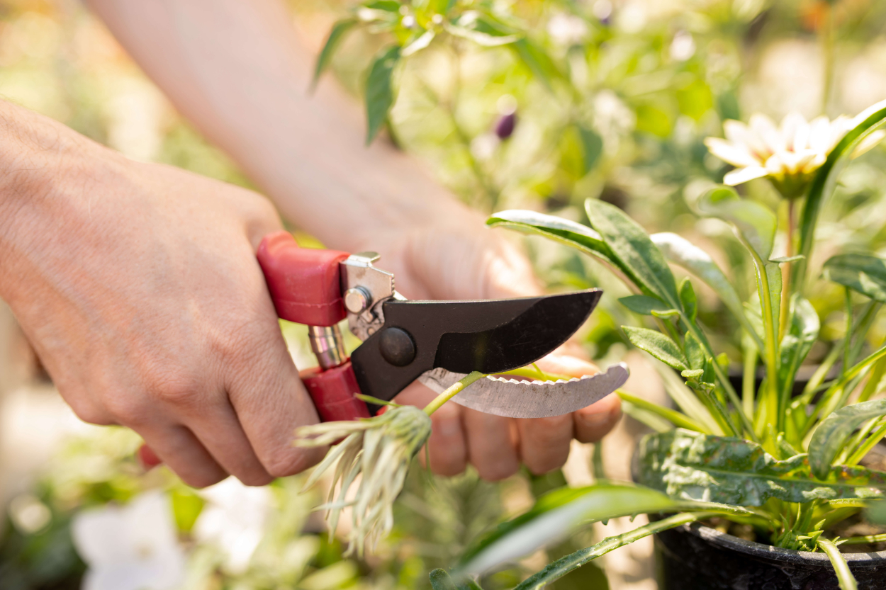 3) Pruning shears