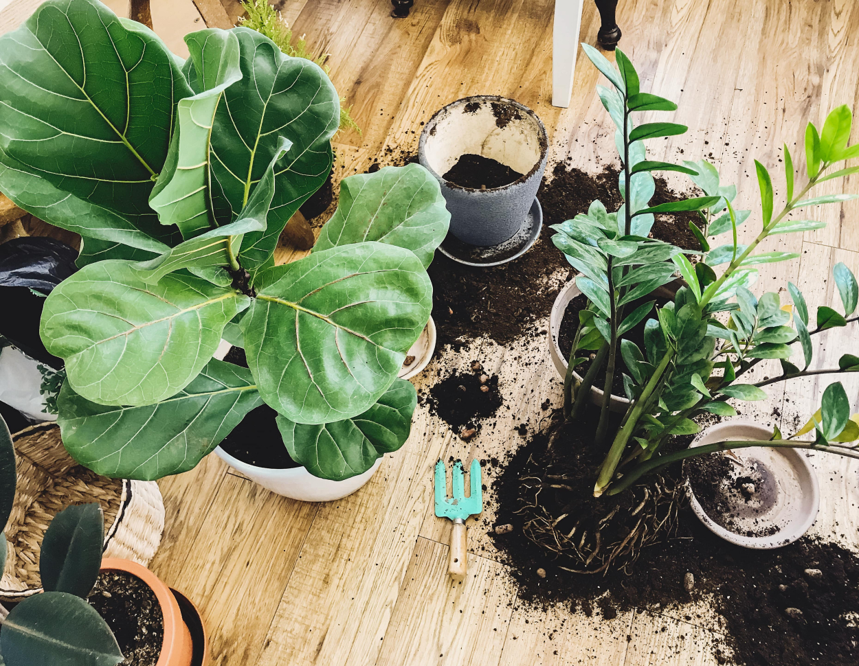 Disadvantages of real indoor plants
