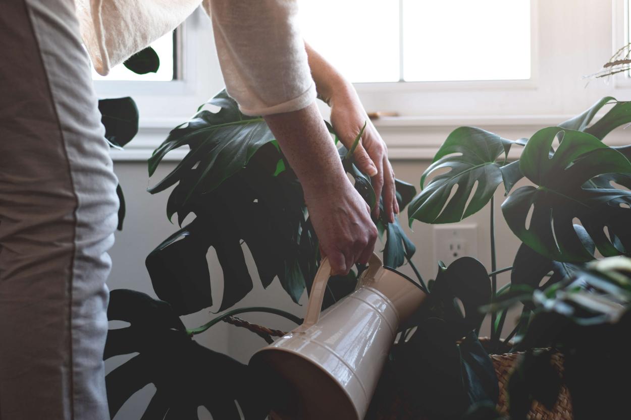 5. Choose the watering method