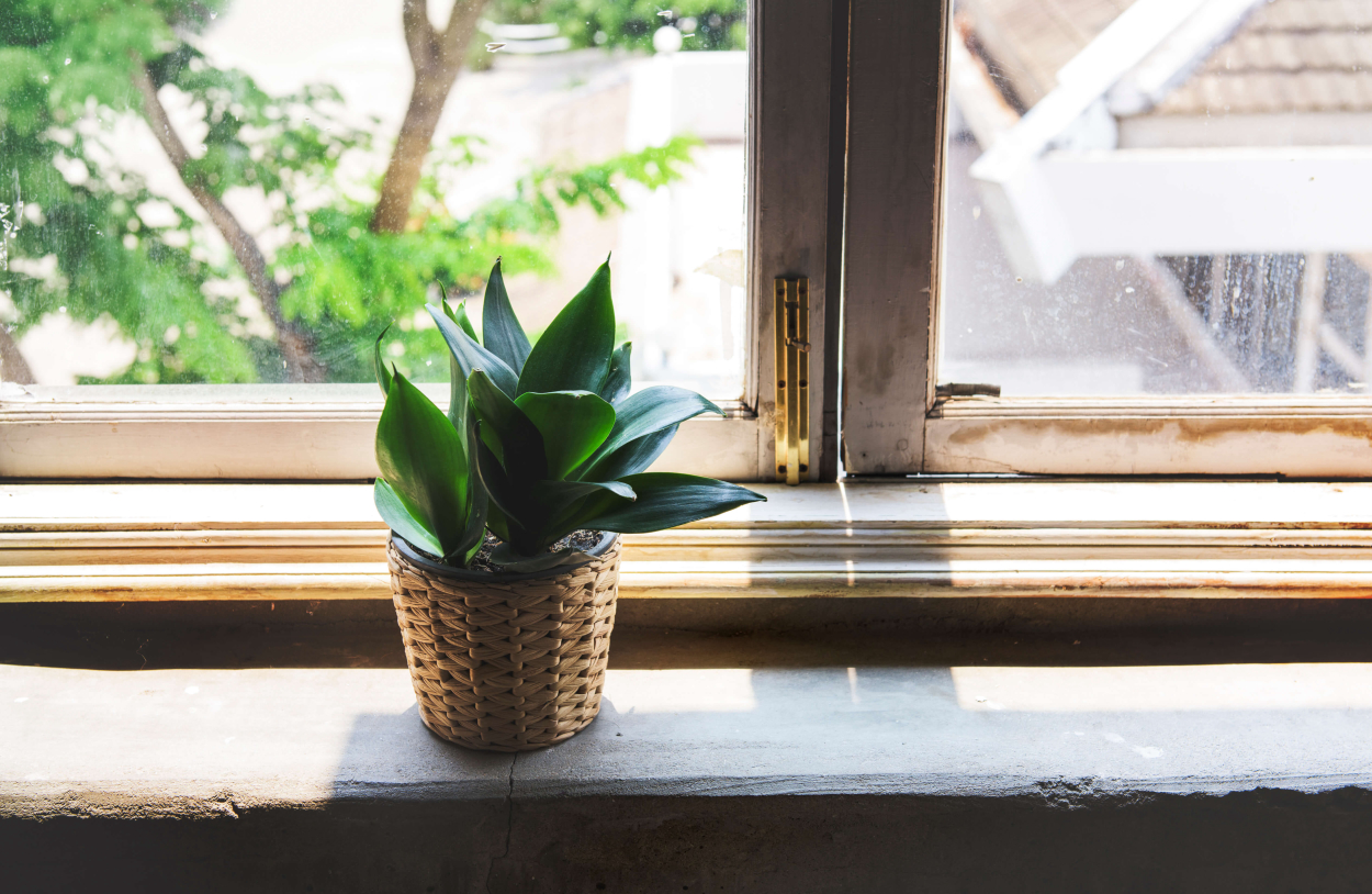 Insufficient or excessive lighting of indoor flowers