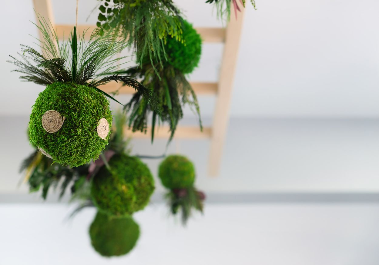 Which plants are the best for kokedama?