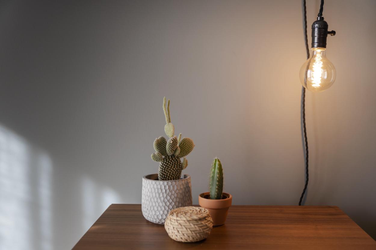 Light-demanding houseplants