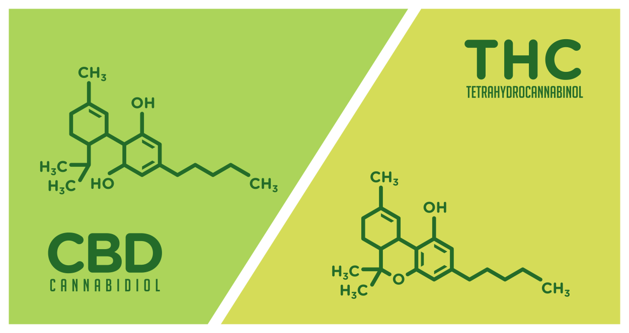 What Are THC and CBD?