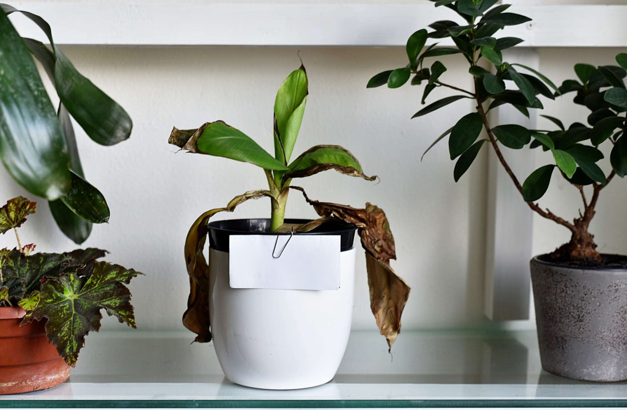 The soil or pot is not suitable for the plant