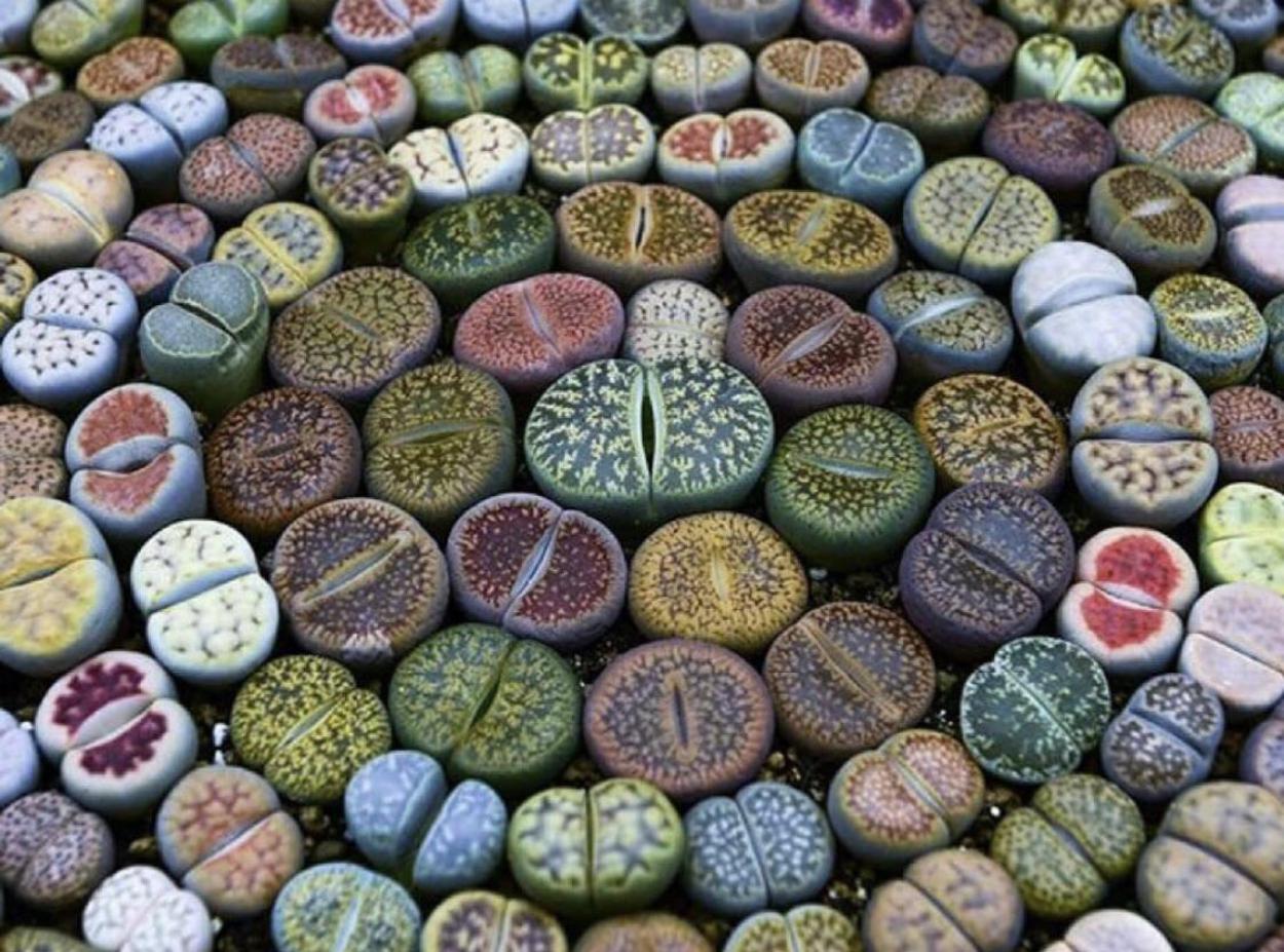 9. Living Stones