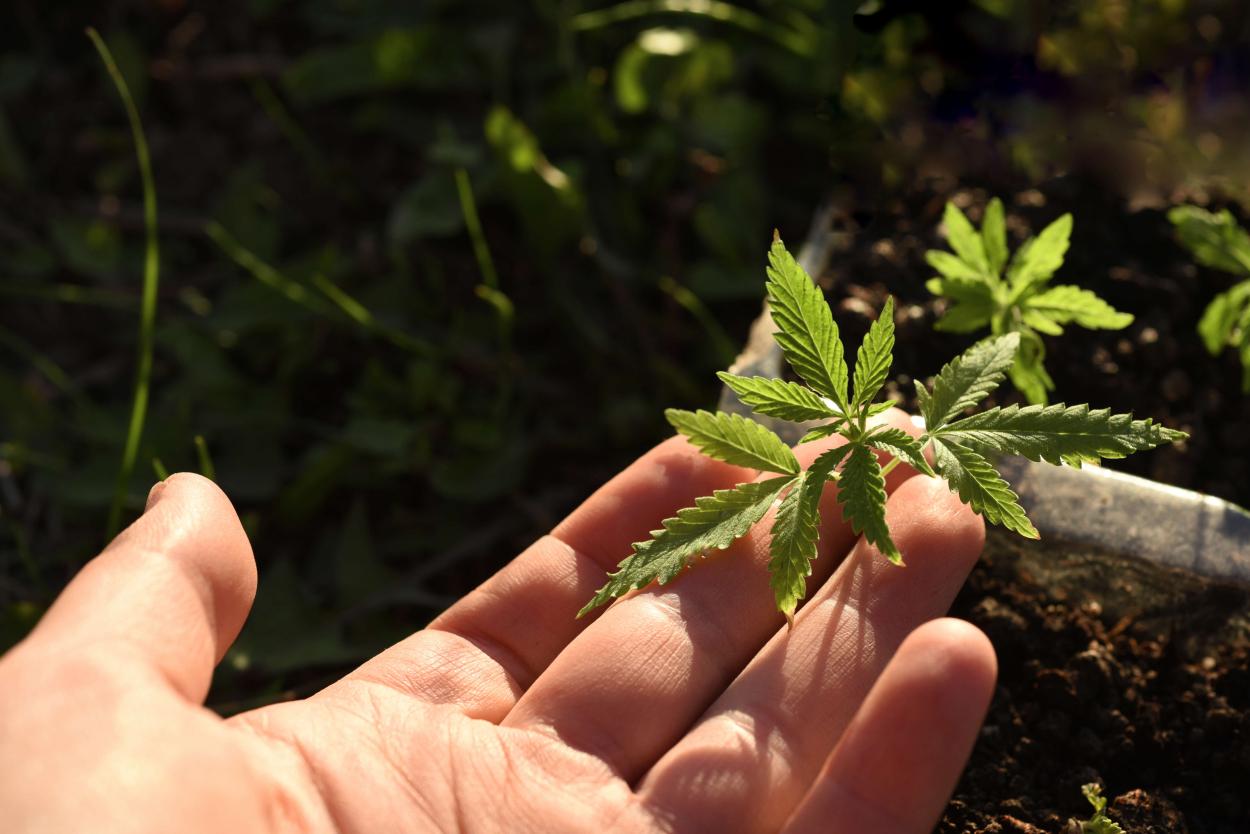 Outdoor growing