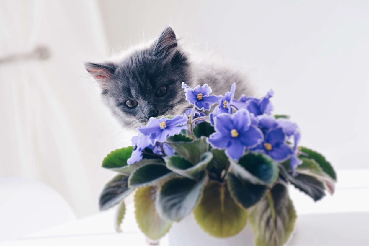 6. African violet