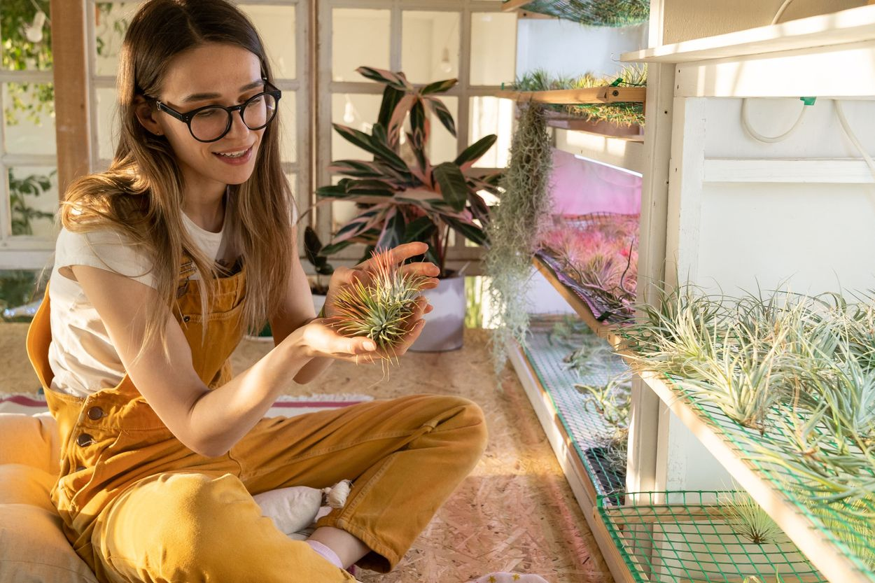 What are air plants?