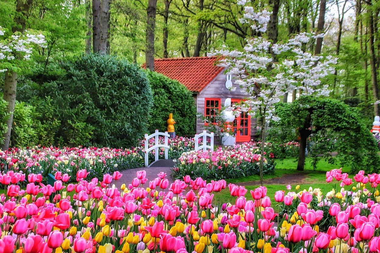 Flower festival in the Netherlands. Keukenhof and Haarlem