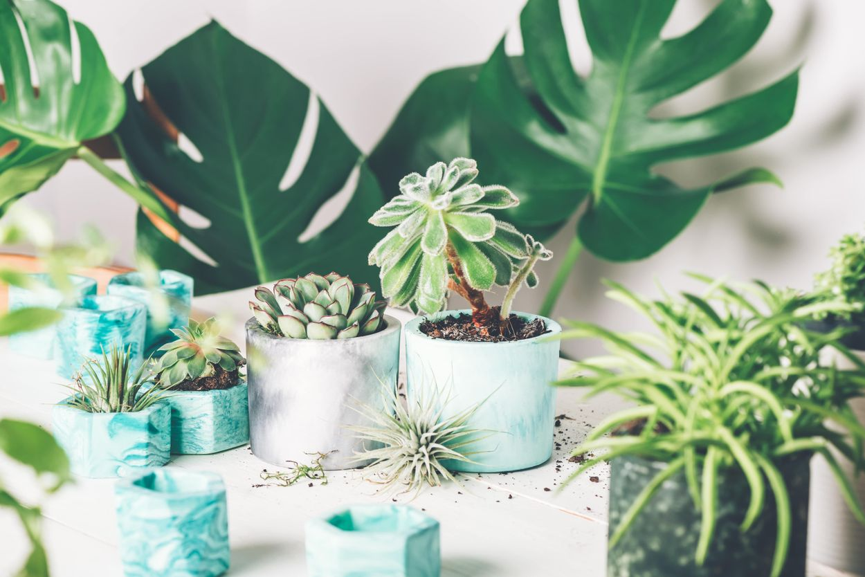 Why caring for a plant?