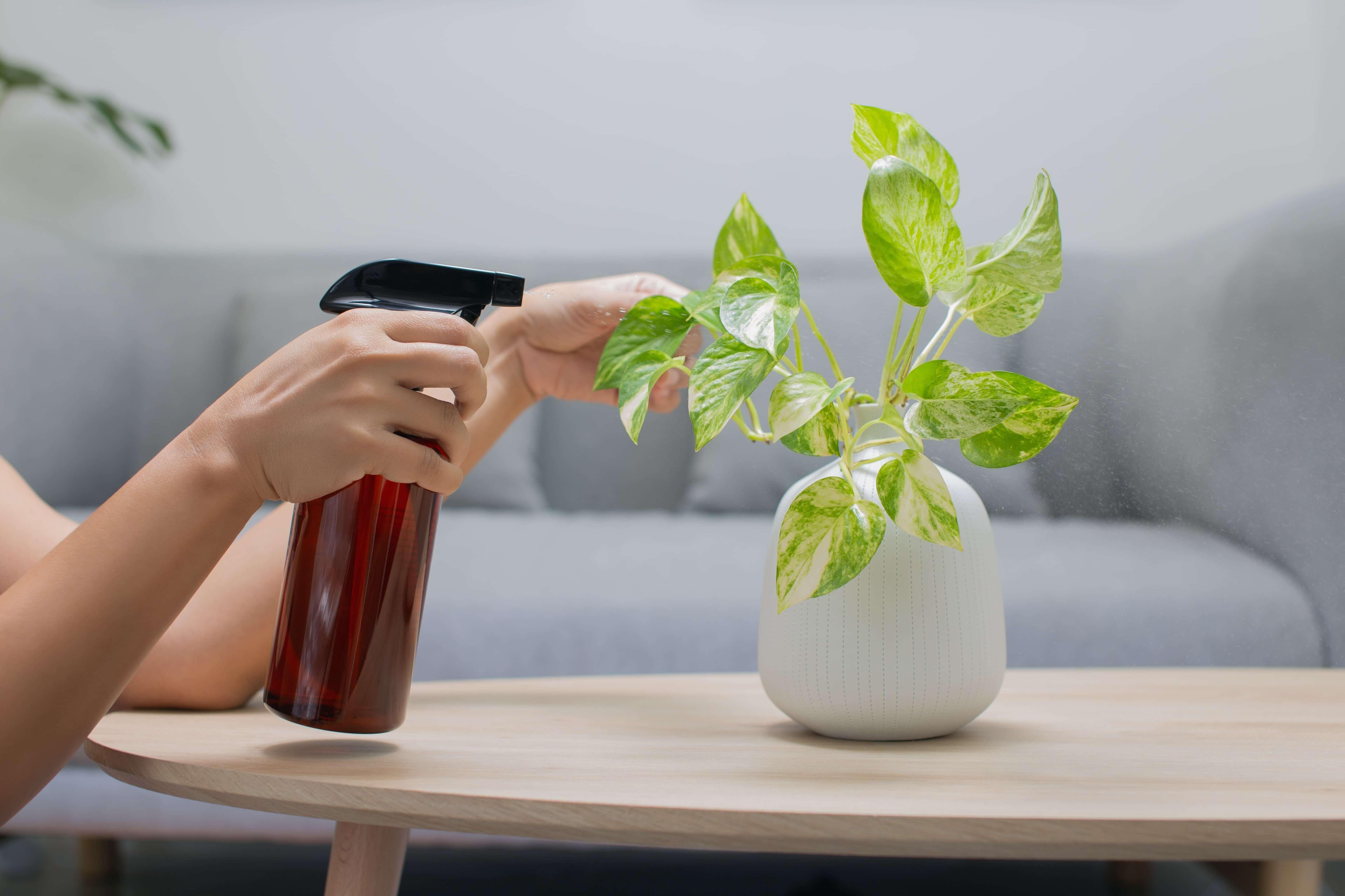 Feed the Foliage