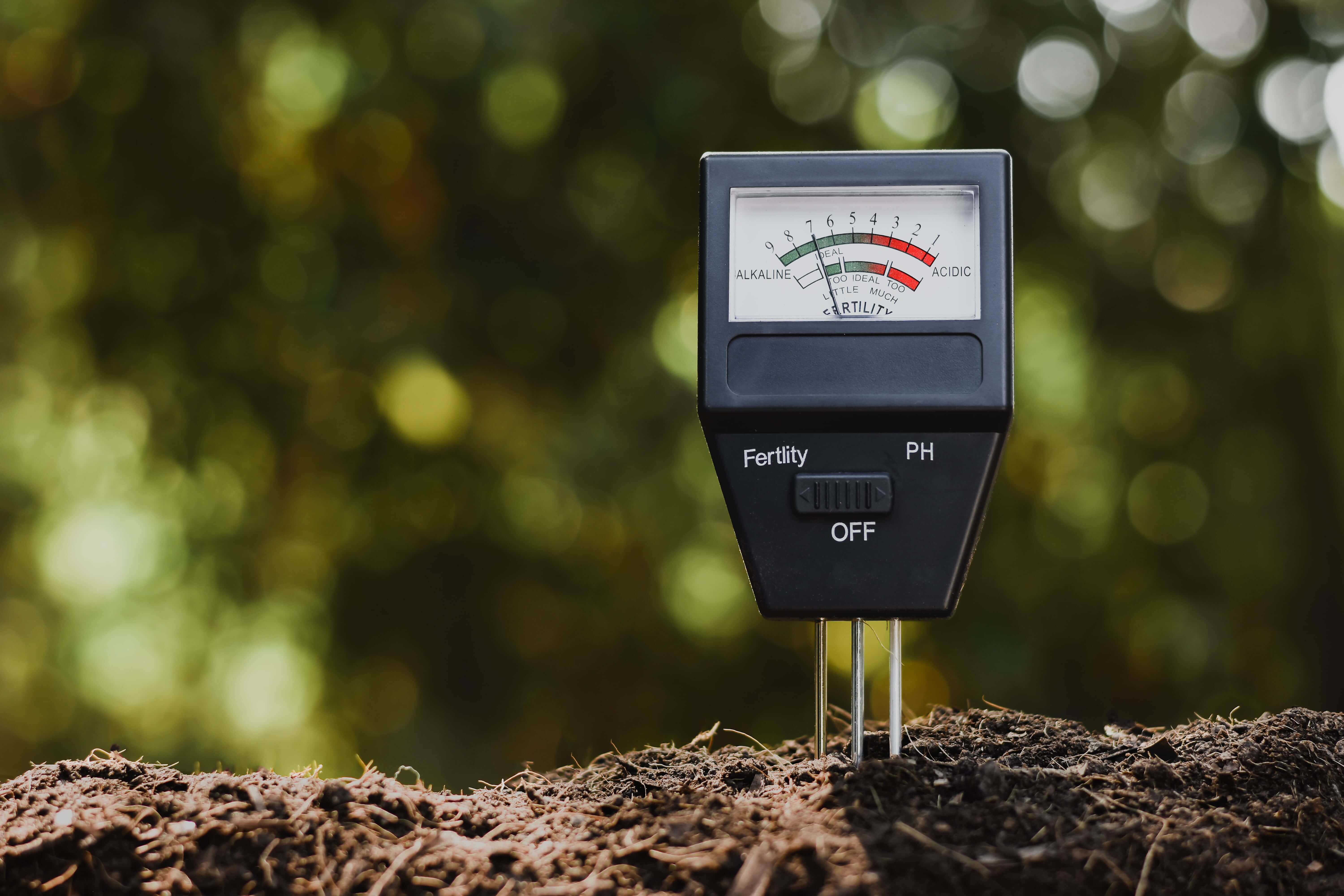 Check Your Soil and pH