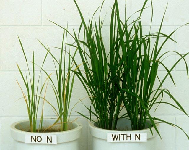 The nutrients plants need. Nitrogen