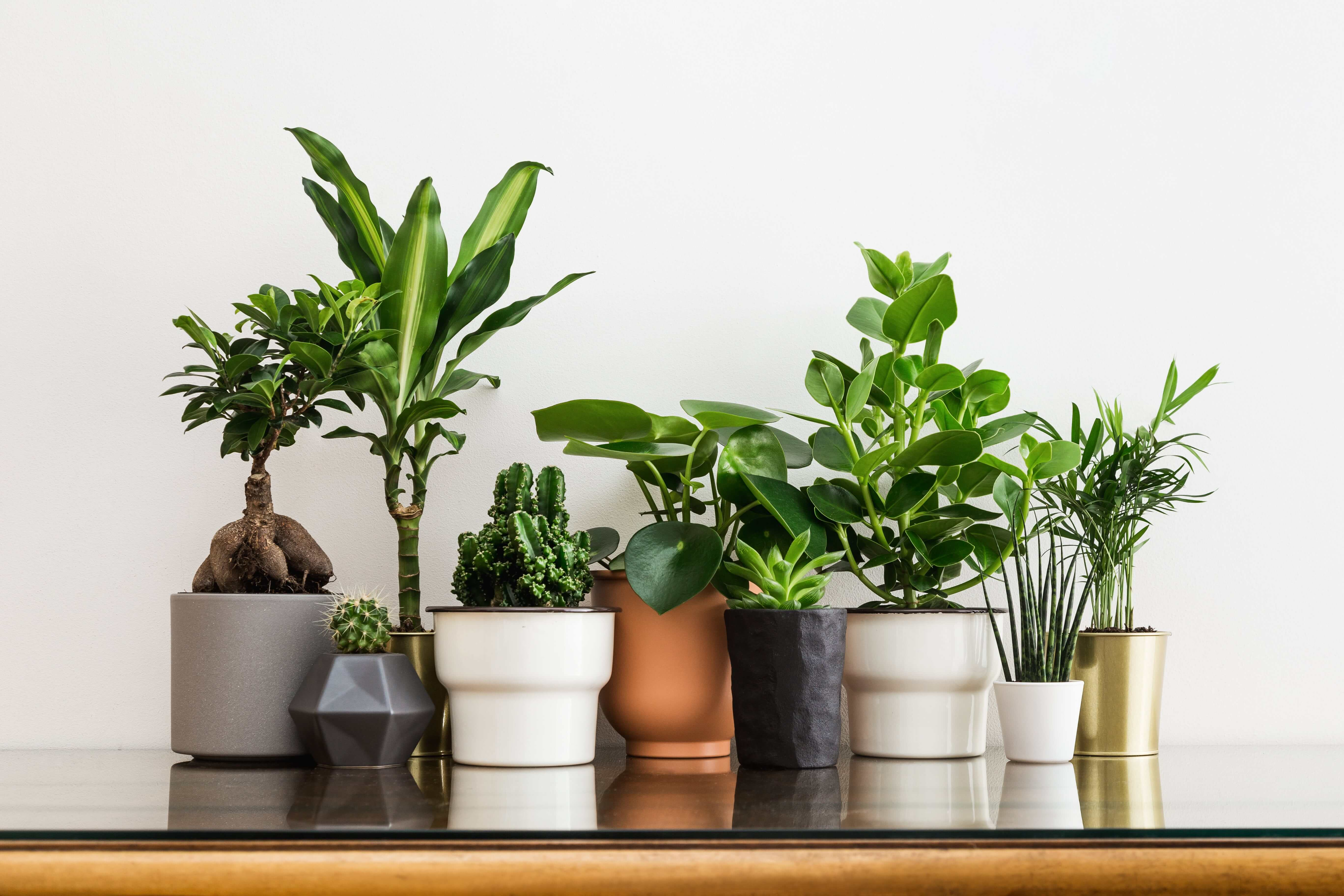 How to choose a right pot