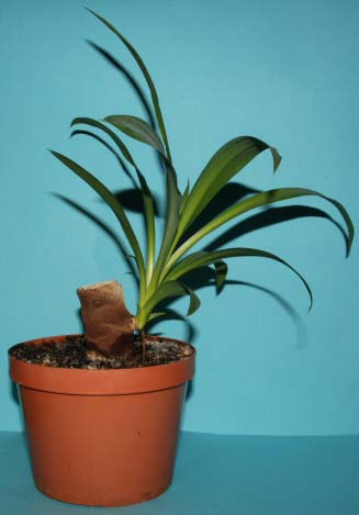 Stem and Cane Cuttings