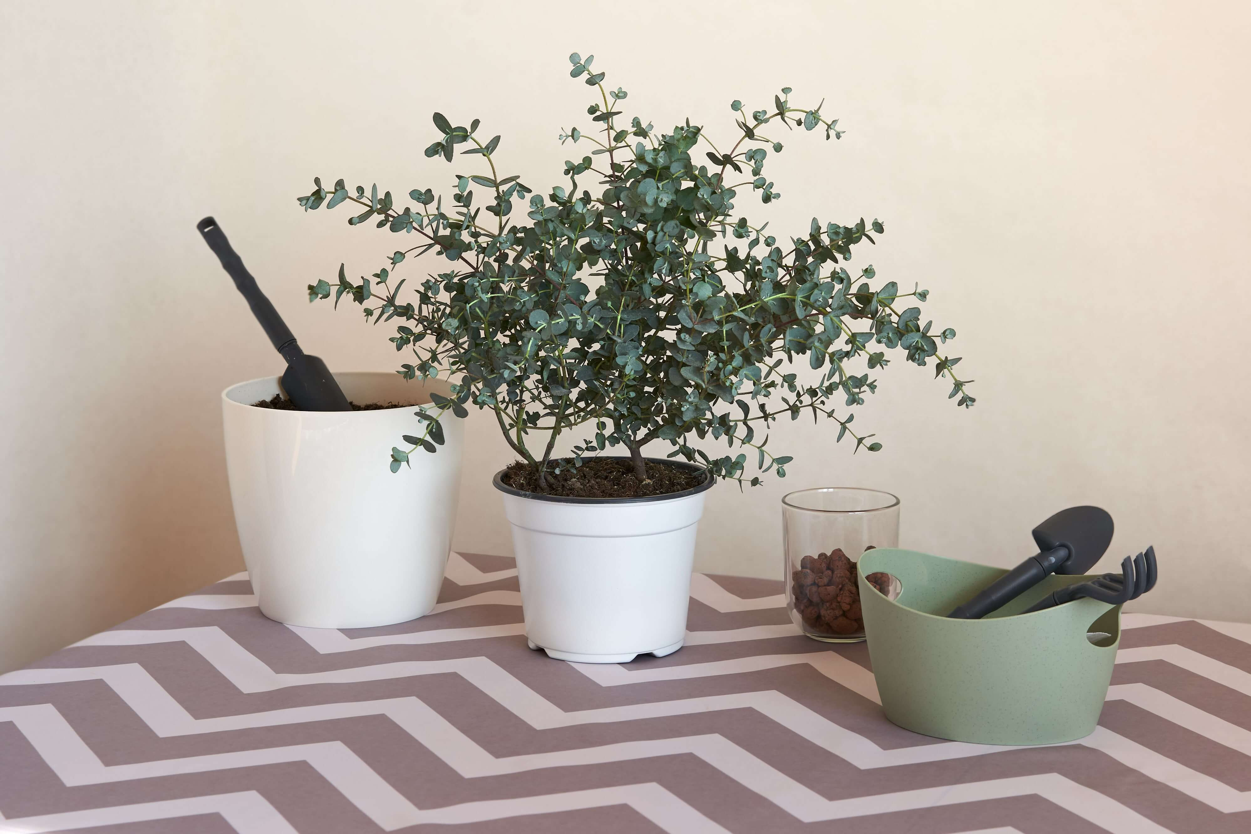 What you need to repot